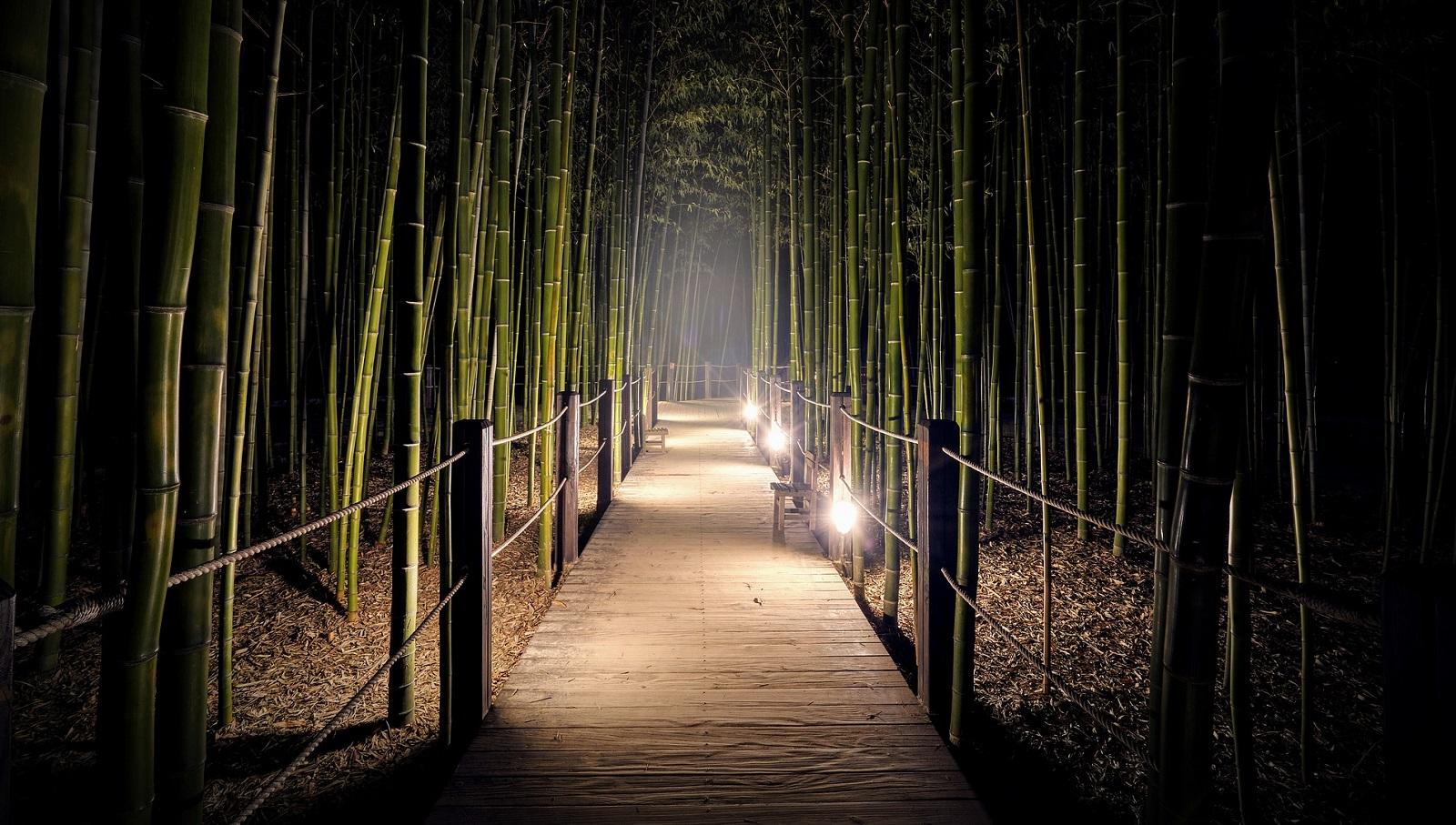 Výběr bambusu