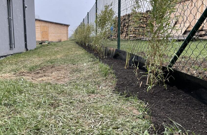 Realizace živého bambusového plotu