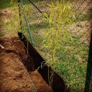 Dnes jsme si mákli na zahradě 💪🏻, neboť včera nám @bambusar.cz dovezl bambusy Fargesia Rufa 😇 Původně jsme si chtěli půjčit bagřík, ale nakonec jsme se na to vrhli s ručním nářadím, neboť čekací lhůty na mechanizaci jsou šílené 🙈  V týdnu ještě musíme koupit kompost, aby se bambusy měly jako v bavlnce 😇 Ale už teď se nemůžeme dočkat až vytvoří neprůhlednou zelenou bariéru 😍 Jak jste na tom vy? Dáváte přednost zeleni nebo klasickému plotu? ☺️  #selfiehome #samisobe #stavbaselfici #bamboo #bambus #svepomoci #zivyplot #fargesia