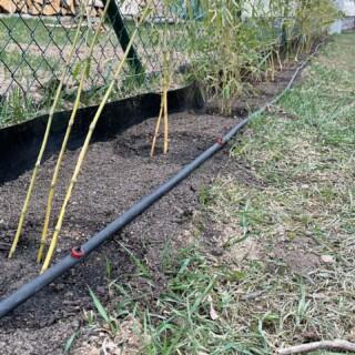 Aby měly bambusy přesně tolik vláhy, kolik potřebují, budujeme pro ně kapkovou závlahu. #samisobe #selfiehome #plot #zivyplot #bambus
